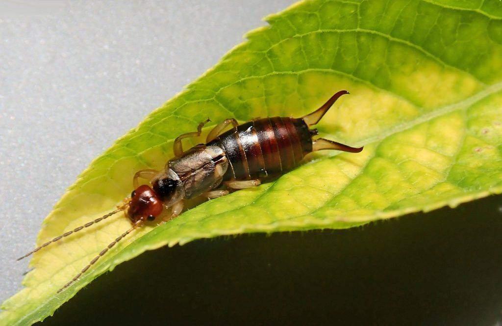 termite pest