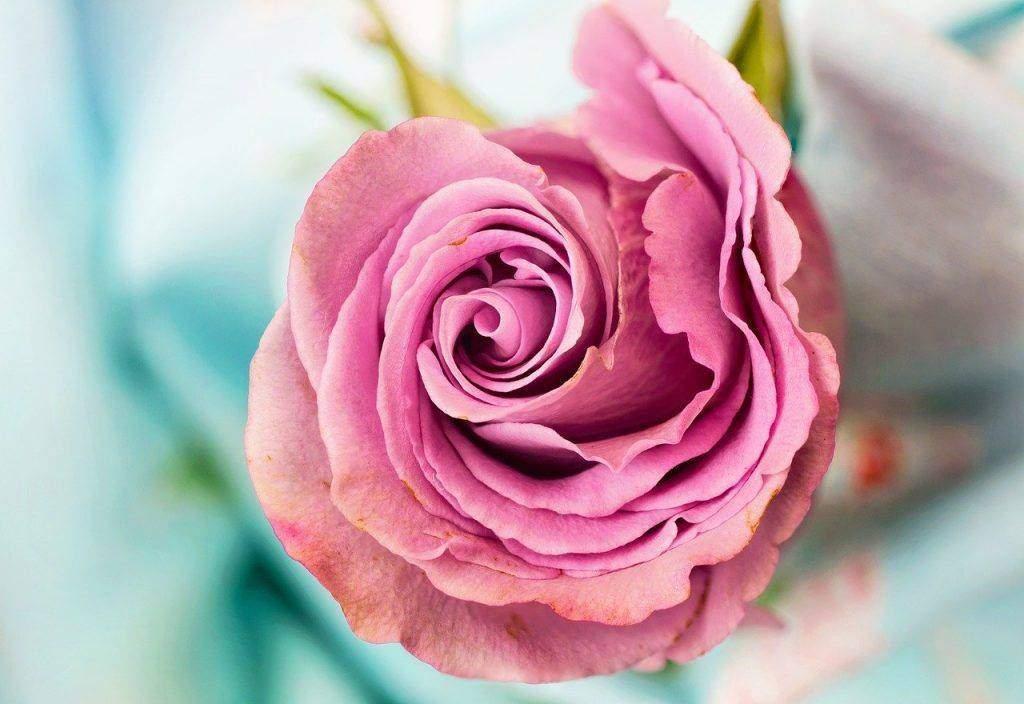 Online Flower Delivery Shop