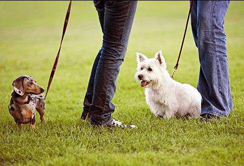 Image result for Five Ways to Keep Your Dog in Healthy Condition