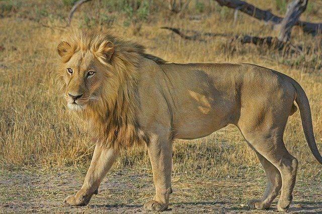 Jungle Safari of Ranthambore National Park