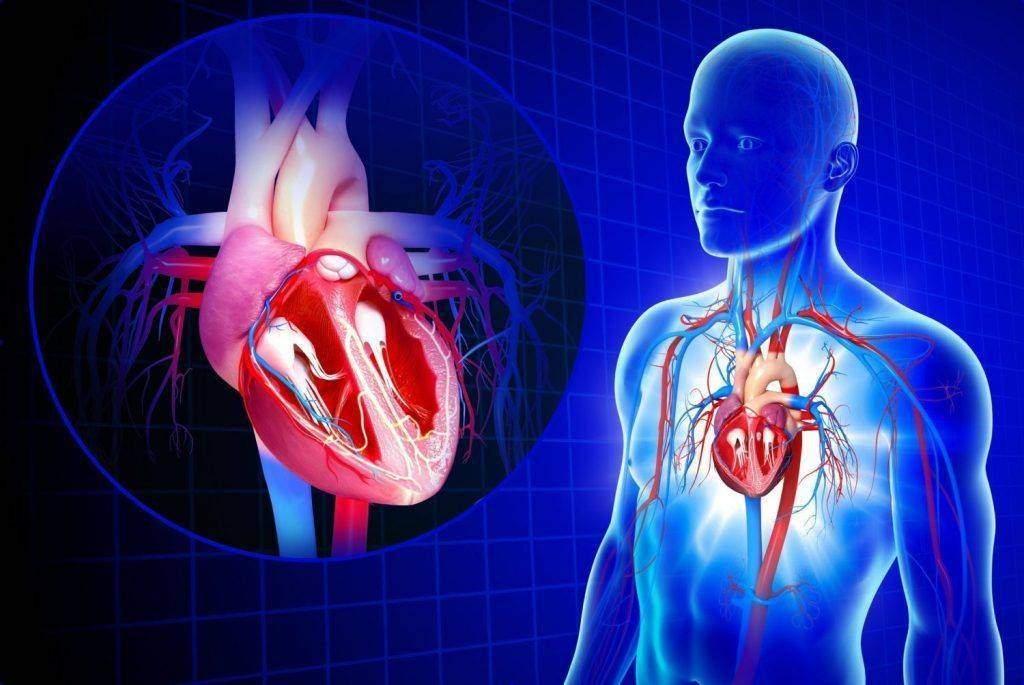 Cardiology: The Saga of Cardiovascular System