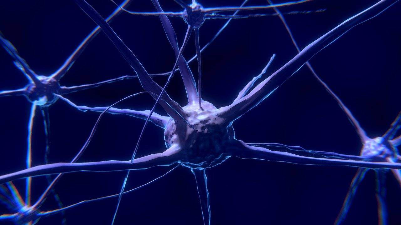 Try These 8 Best Foods for Healthy Nerves System