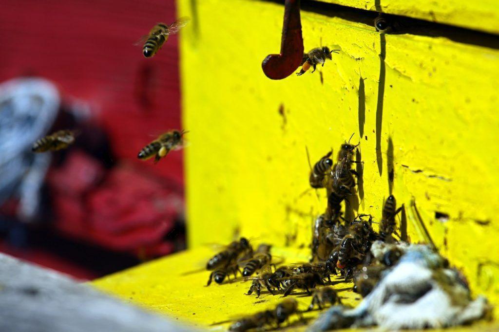 Hiring A Pest Control Professional