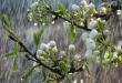 Monsoon Gardening