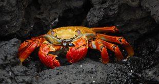 crab-63084_640