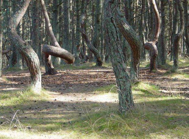 Unusual Forests of the World