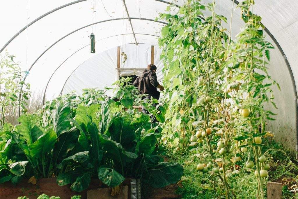 9 Reasons To Grow Your Own Food