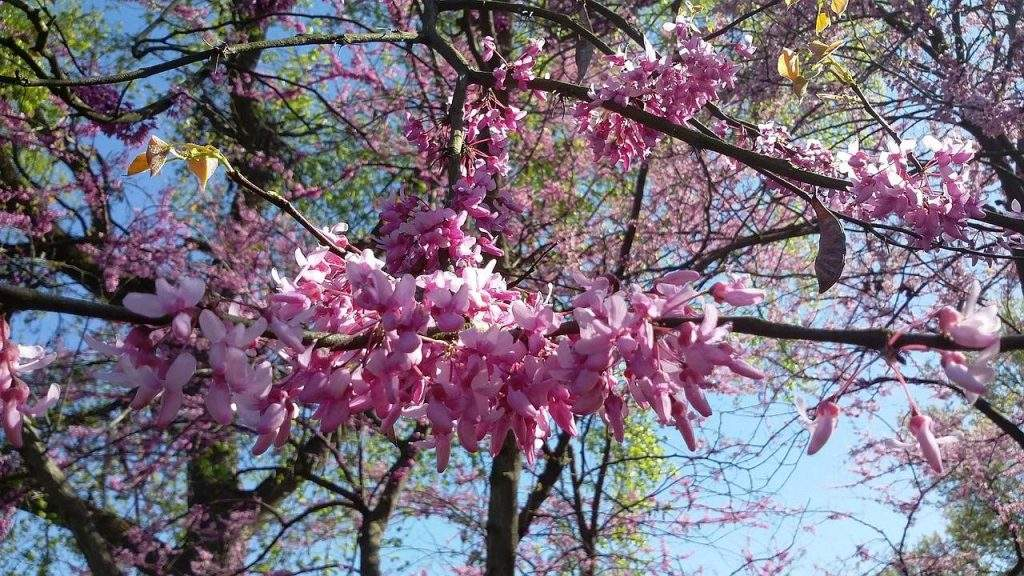 Prepare Your Trees for Spring