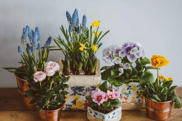 The Complete House Plant Guide for Those Without Green Thumbs