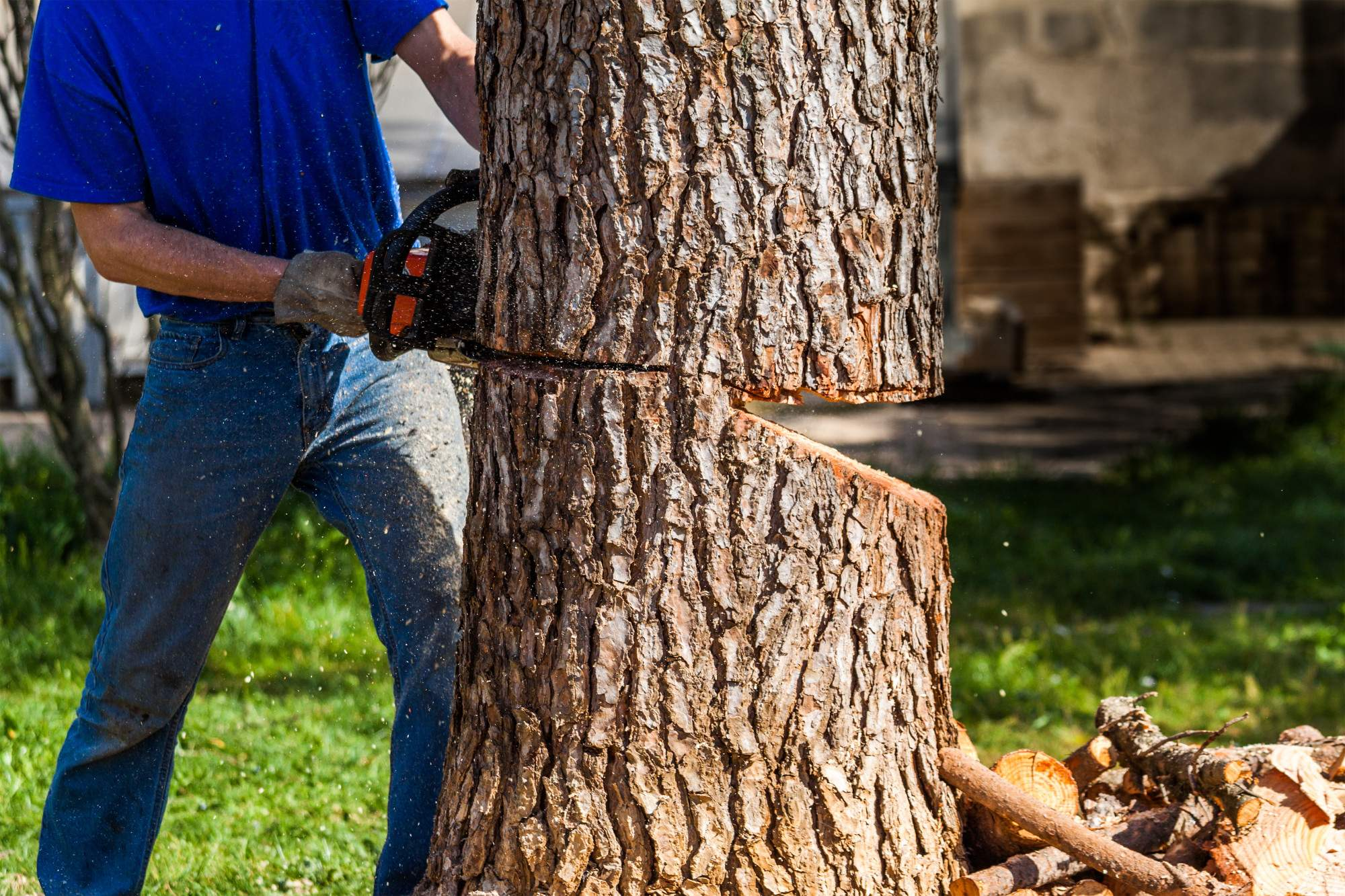 Tree Removal Companies : How to Choose
